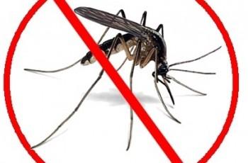 Les moustiques attaquent !